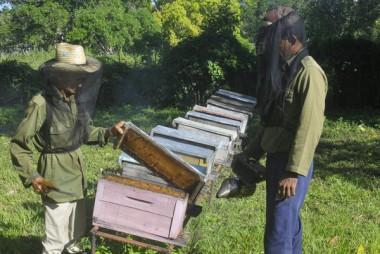 Crece la producción de miel de abejas